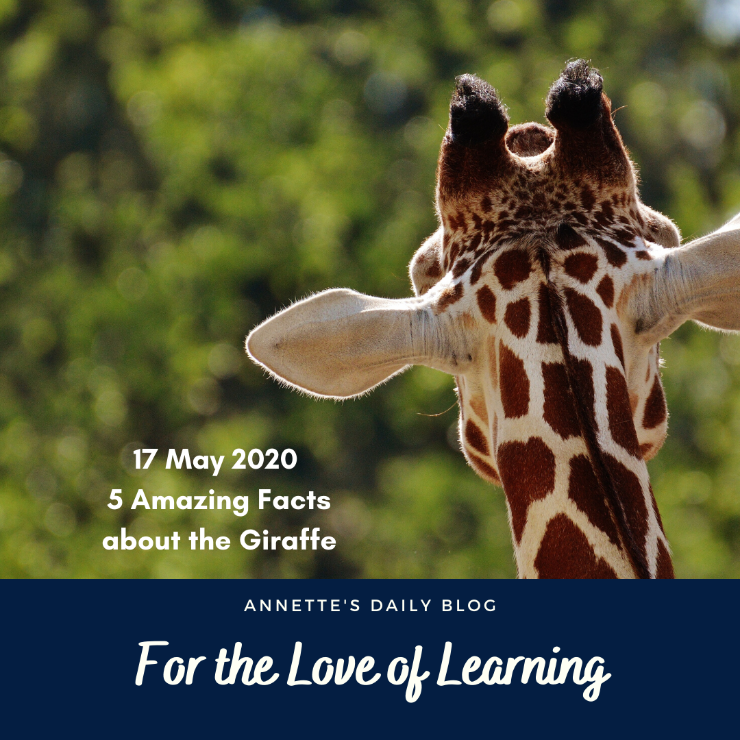 For the Love of Learning, 17 May 2020 : 5 Amazing Facts About The Giraffe