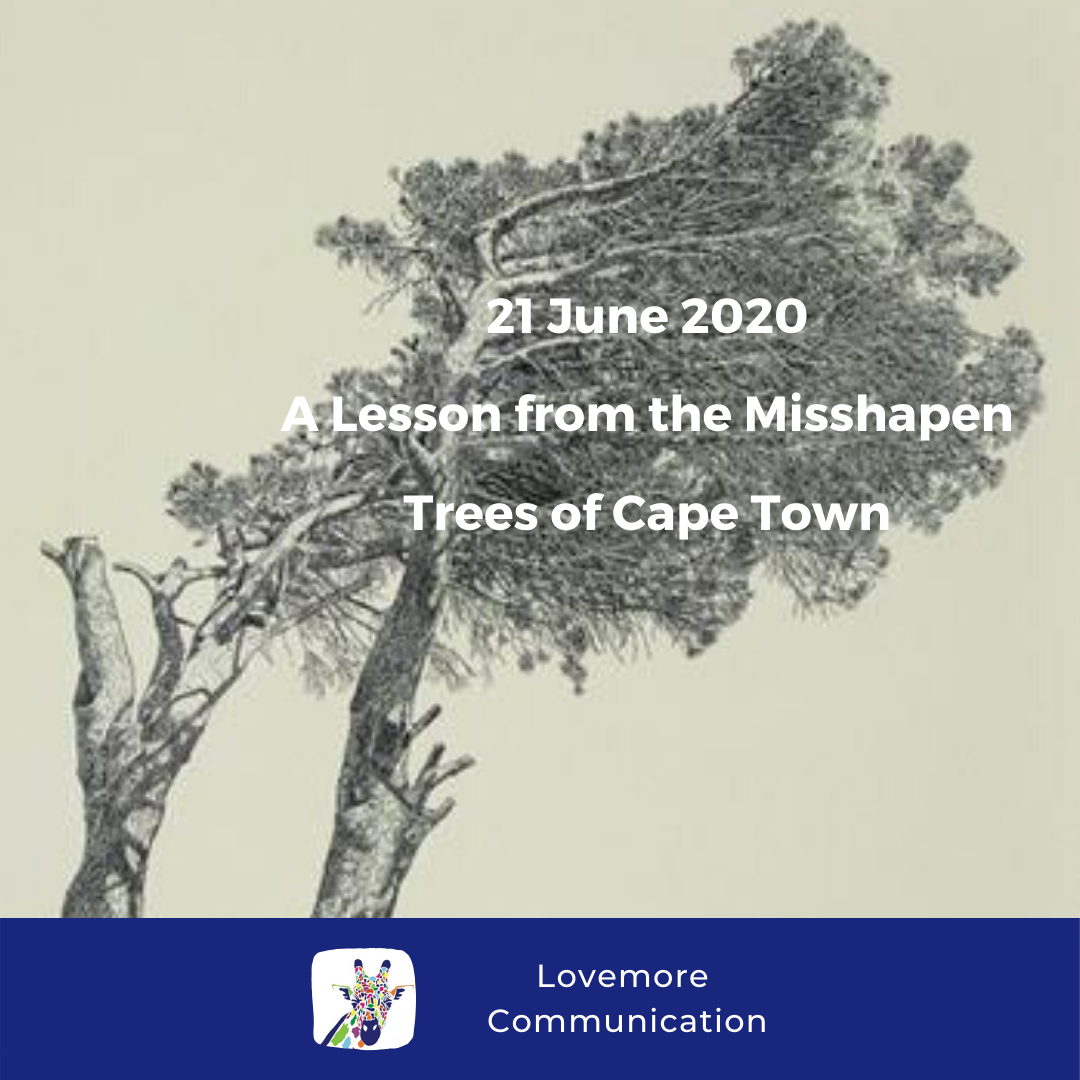 For the Love of Learning, 21 June 2020 : A Lesson from the Misshapen Trees of Cape Town