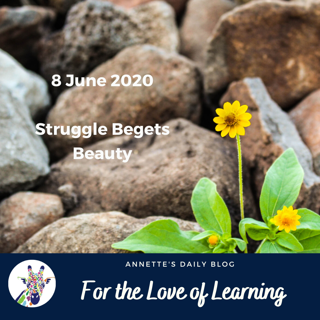 For the Love of Learning, 8 June 2020 : Struggle Begets Beauty