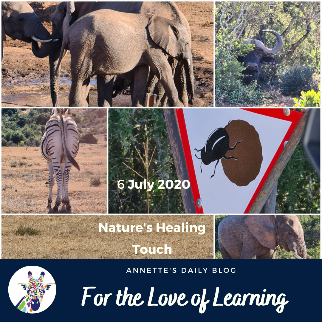 For the Love of Learning, 6 July 2020 : Nature's Healing Touch